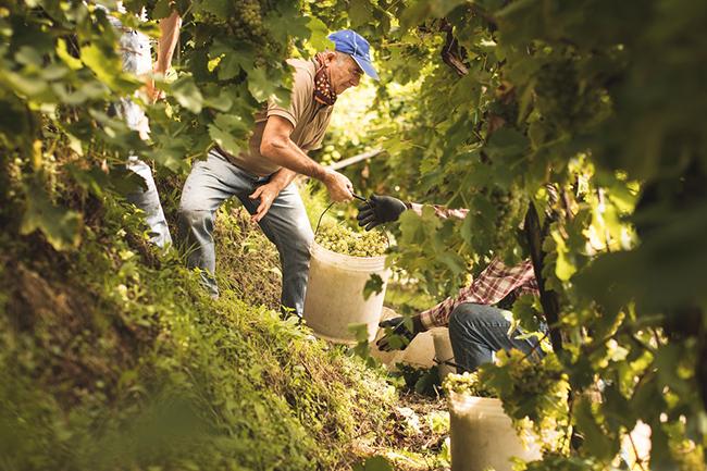 Non, tous les vins de prosecco ne sont pas