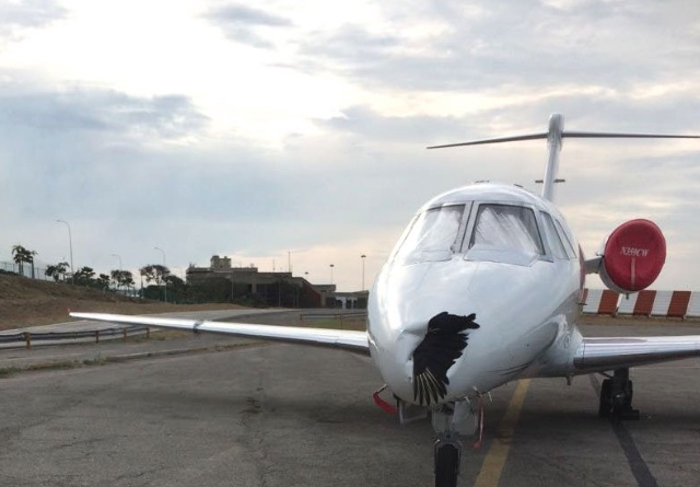 Pilot lands with bird carcass in plane's nose cone