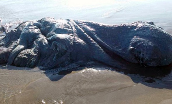 Mysterious 'sea monster' washes up on beach in Mexico