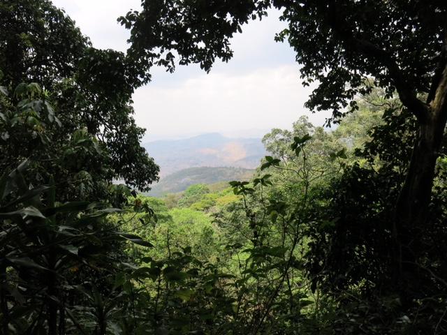 La forêt tropicale encore luxuriante, malgré la saison