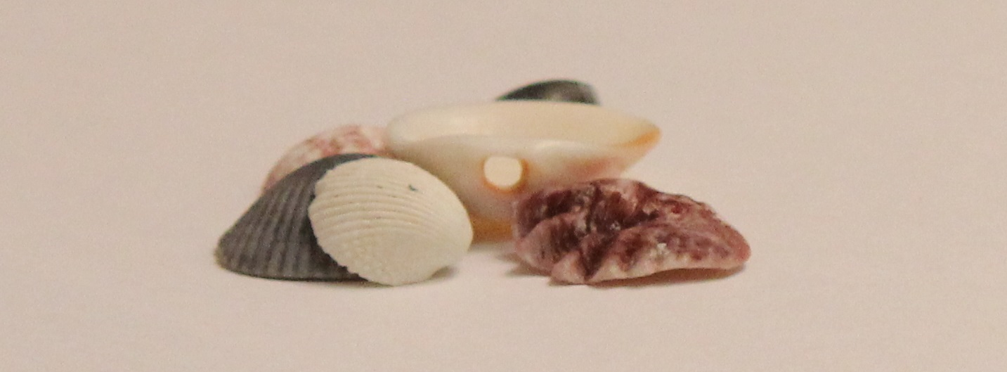 Shells as beads