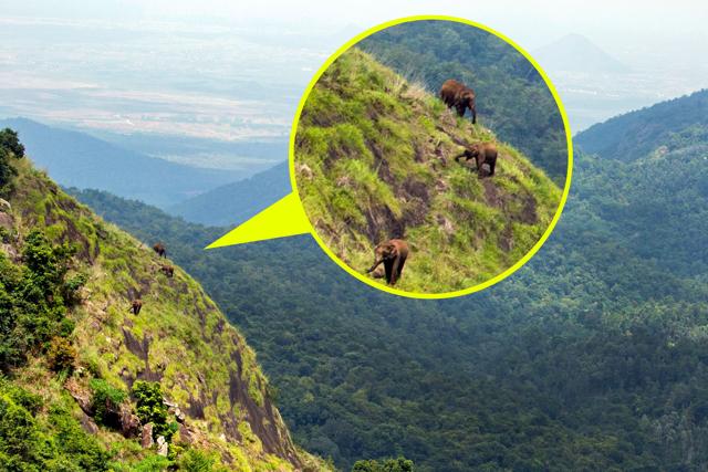 Have you ever seen elephants climb a mountain?