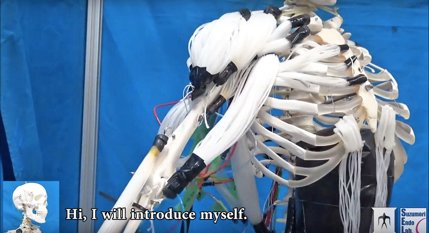 researchers create skeleton robot with human-like muscles, Skeleton