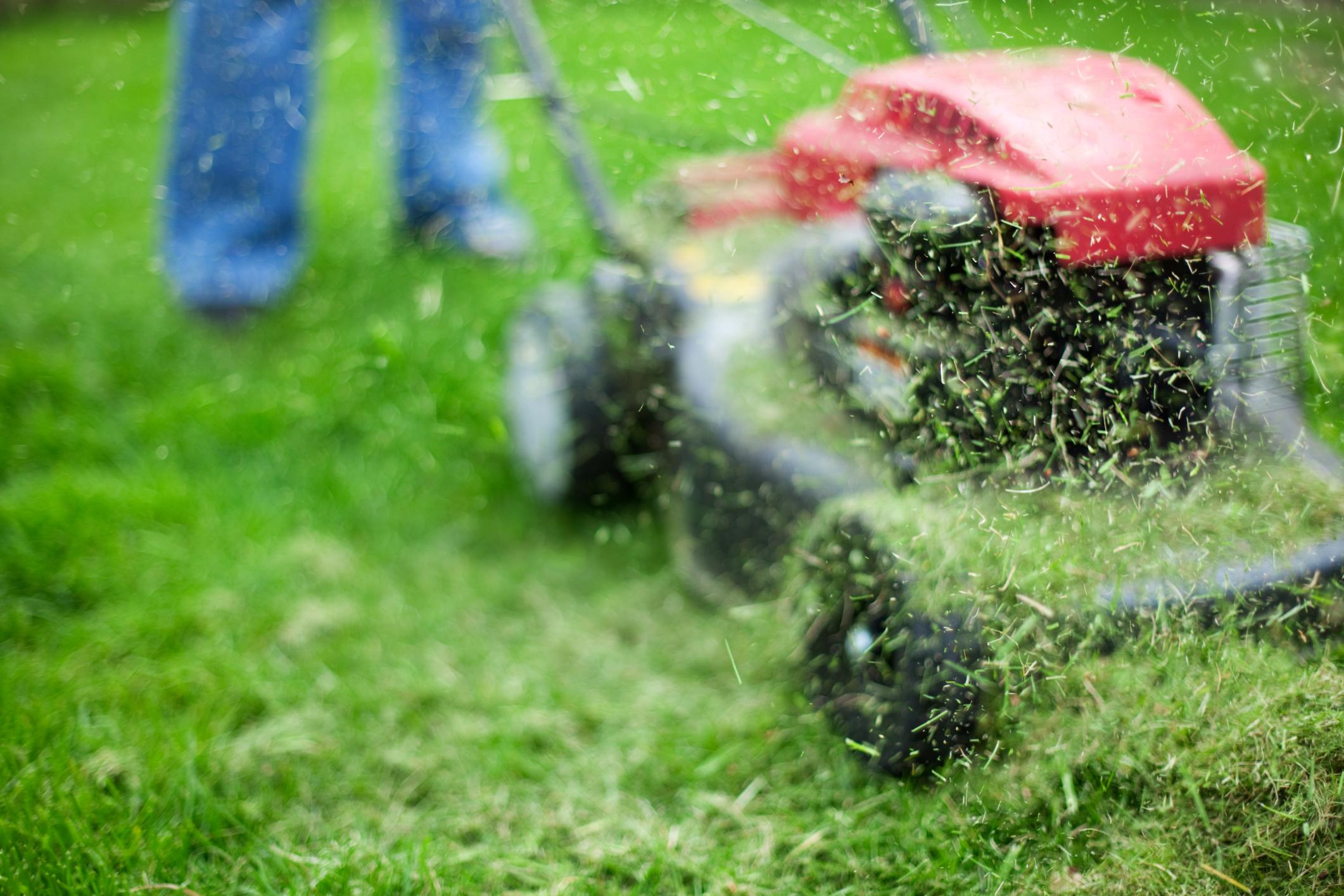 科學家發現將草轉換成汽油的簡便方法