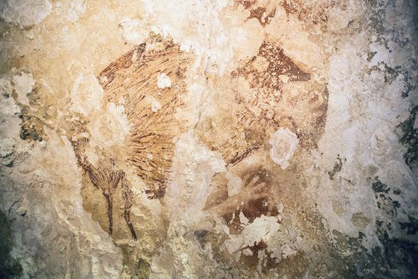 Embargoed to 1800 Wednesday October 8  Undated handout photo issued by the University of Wollongong of a Babirusa ('deer-pig') and a hand stencil found in a cave in Indonesia, raising new questions about early mankind and the development of art in prehistoric times. PRESS ASSOCIATION Photo. Issue date: Monday September 8, 2014. Animal drawings and hand stencils, the earliest of which has been radiocarbon-dated to almost 40,000 years ago, were discovered by a team of Australian and Indonesian archaeologists on the island of Sulawesi. See PA story SCIENCE Painting. Photo credit should read: Kinez Riza/University of Wollongong/PA Wire  NOTE TO EDITORS: This handout photo may only be used in for editorial reporting purposes for the contemporaneous illustration of events, things or the people in the image or facts mentioned in the caption. Reuse of the picture may require further permission from the copyright holder.