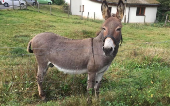 Confused donkey chews carrot-colored McLaren | Autoblog