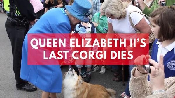 エリザベス女王の飼っていた最後のコーギー犬が亡くなる