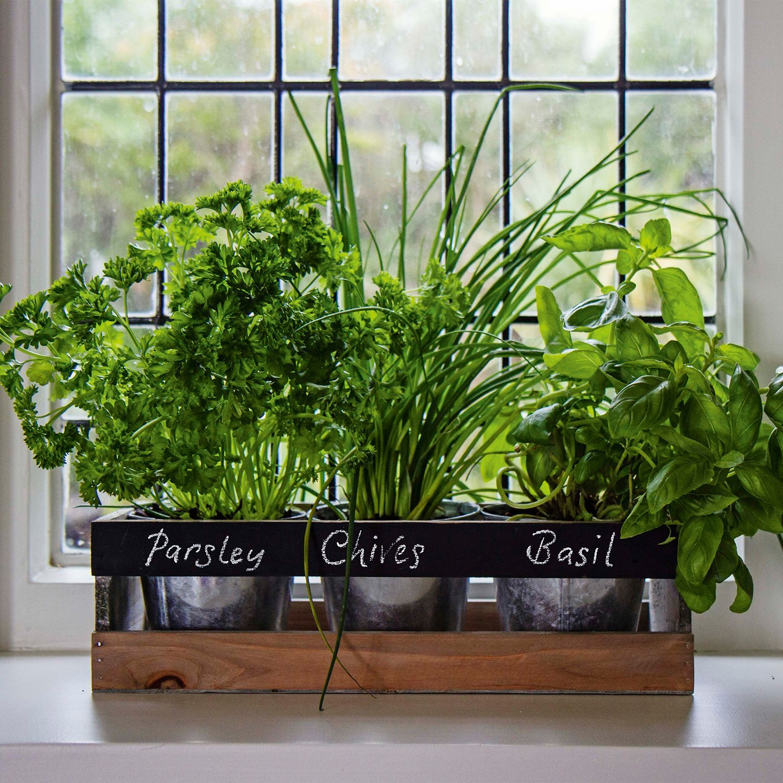 Kitchen Bench Herb Garden: Eight Gorgeous Buys For The Kitchen