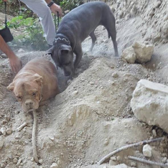 Dog buried alive in France sparks social media outrage