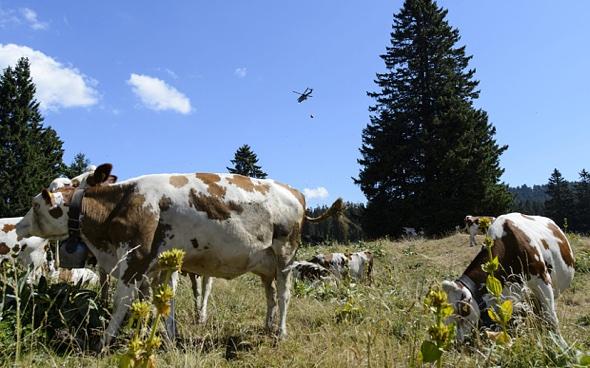 Switzerland 'steals' French water to help thirsty cows