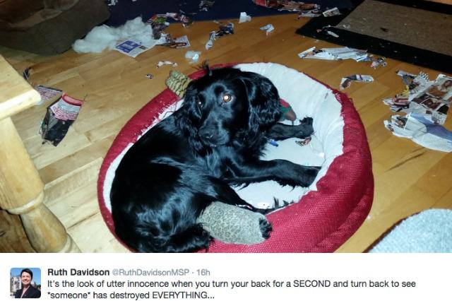 MP's destructive dog