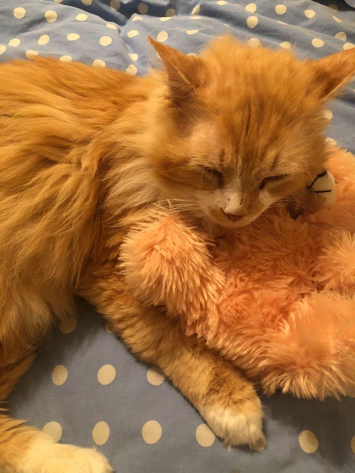 Un chat trouve finalement une famille après avoir cherché ses propriétaires durant 12