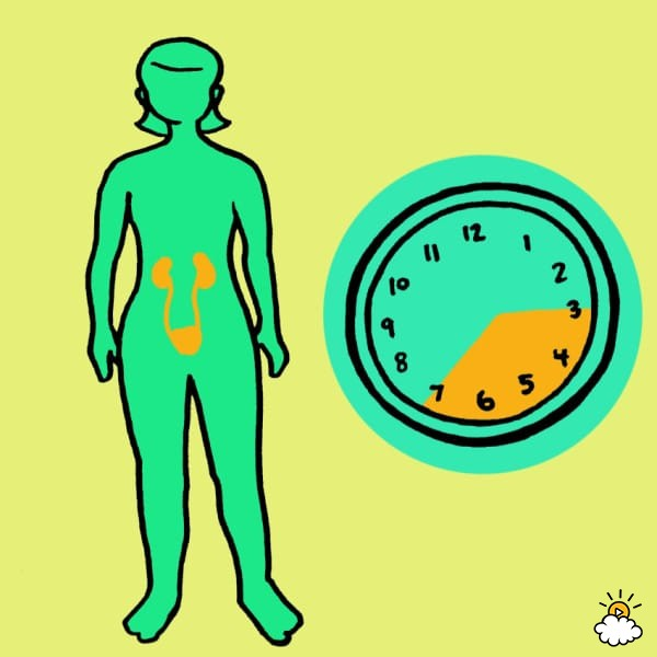 embeddedIMG_WhatYourBodyIsTryingToTellYouByWakingYouUpAtTheSameTimeEveryNight_850px_10-600x600 - Waking at the same time each night reveals details about your health - Health and Food