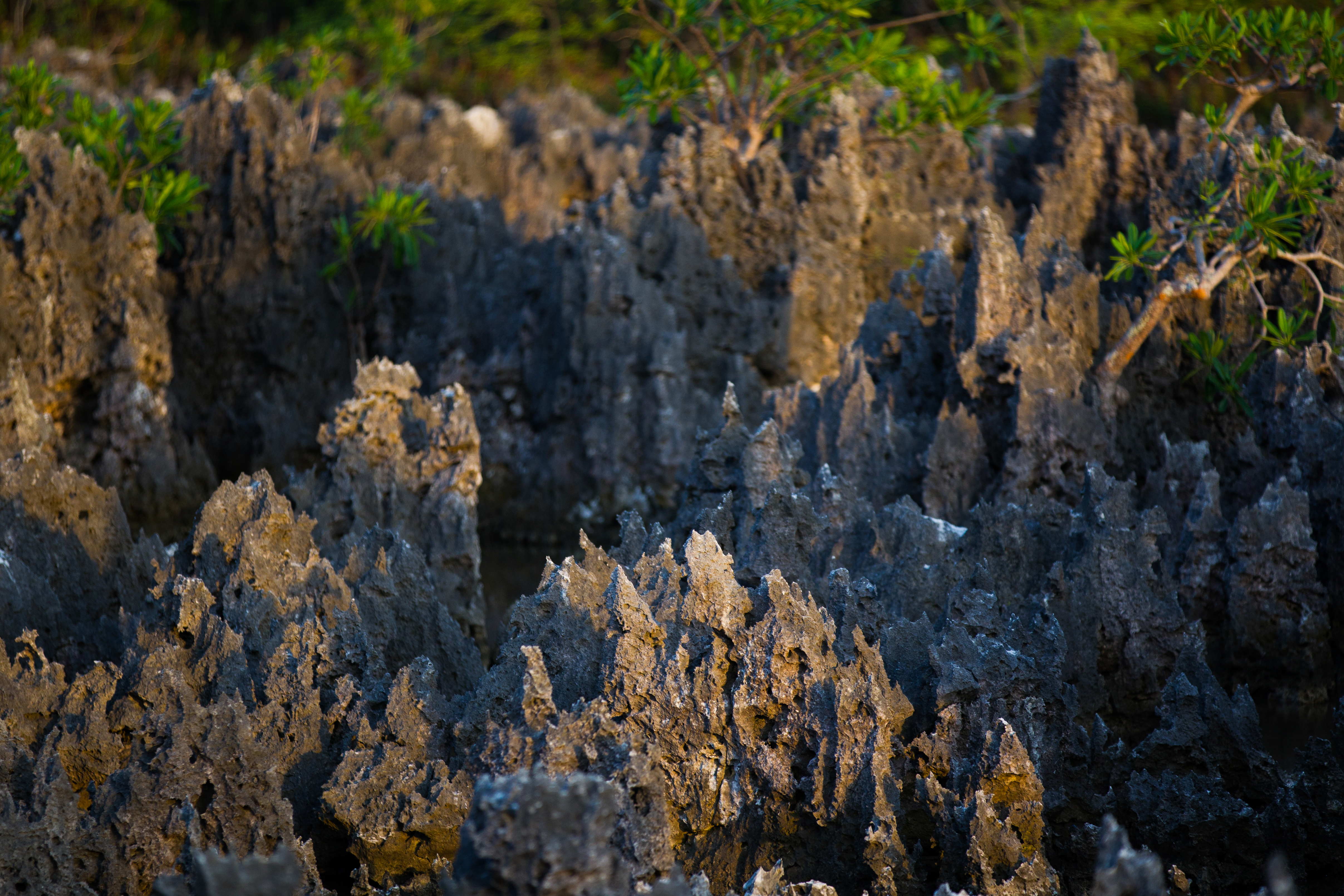 """Jagged limestone formations at """"Hell"""", Grand Cayman Islands."""