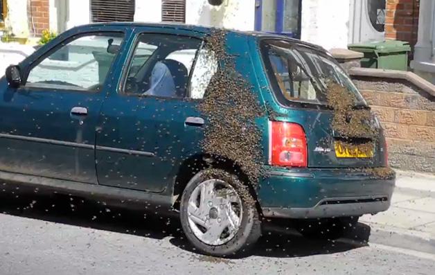 【ビデオ】日産「マーチ」におびただしい数の蜂の群れが襲撃!