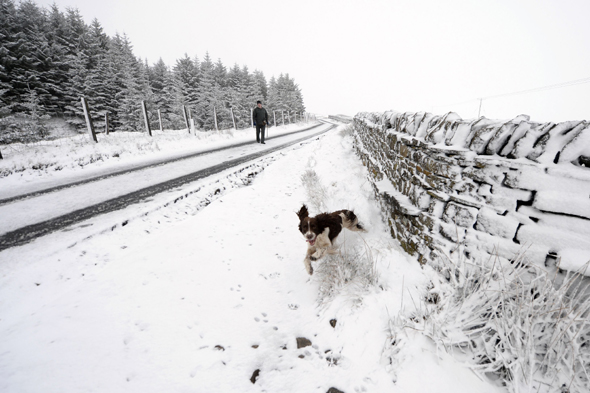 A spaniel plays in snow in Nenthead on the Cumbria and Northumberland border.