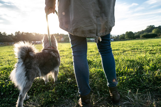 Unrecognizable young woman on a walk with a dog in green sunny