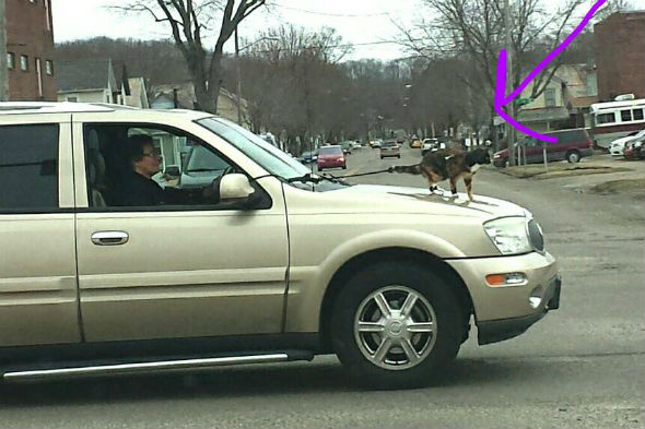Eldery woman drives with cat on bonnet