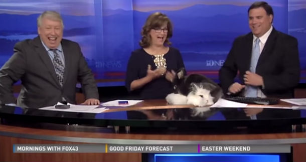 local news bloopers video