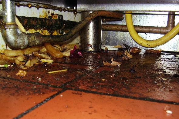 Globe Inn Frogmore Food Poisoning