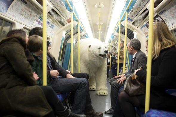 Polar bear shocks commuters on the Tube