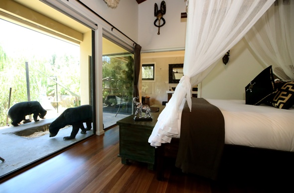 Lunch with lions and bedrooms with bears: Introducing the new zoo hotel