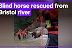 Firefighters rescue blind horse from river in Bristol