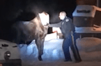 Troopers Remove Bag From Distressed Moose's Head