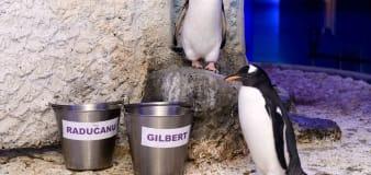 Penguins named after Emma Raducanu and vaccine developer Dame Sarah Gilbert