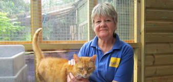 Thrill-seeking pensioners to attempt wing-walk for cats charity