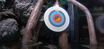 Archer fish show off Olympic credentials by shooting at target