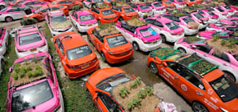 Idle Thai taxis go green with mini gardens on car roofs