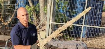 Israeli scuba diver discovers ancient Crusader sword